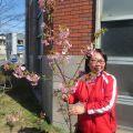 河津桜が咲きました!